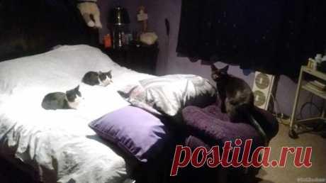 20 фото прекрасных кошек, которые гарантированно поднимут вам настроение