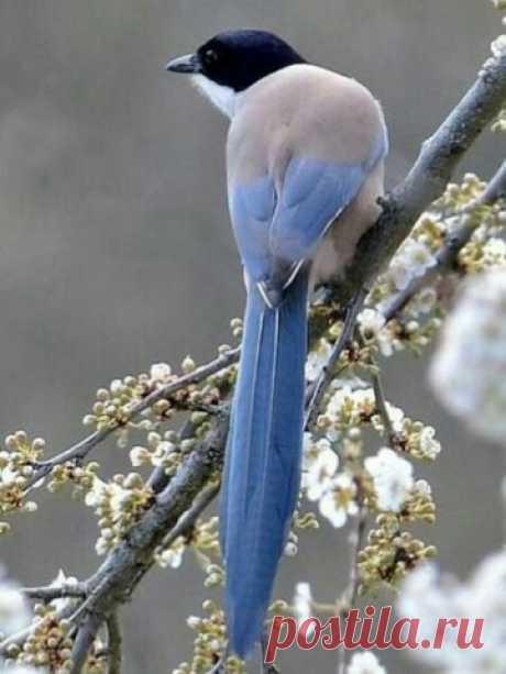 """Именно в это утро она впервые подумала, что, когда птицы громко поют, это, наверное, просто от радости.  Фрэнсис Бернетт """"Таинственный сад"""""""