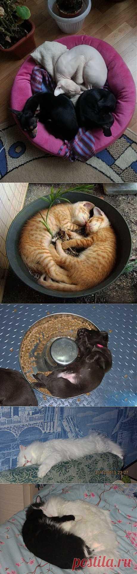 Спят усталые...зверушки! | Четвероногий юмор