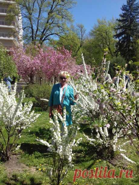 Украшаем жизнь и сад красотой под названием Сперия и Глициния. | Стиль и досуг | Яндекс Дзен