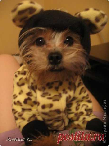Обещанный мастер класс по пошиву комбинезона для собак