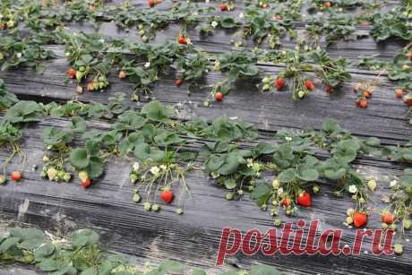 Виды укрывного материала для огорода и как его использовать | 6 соток