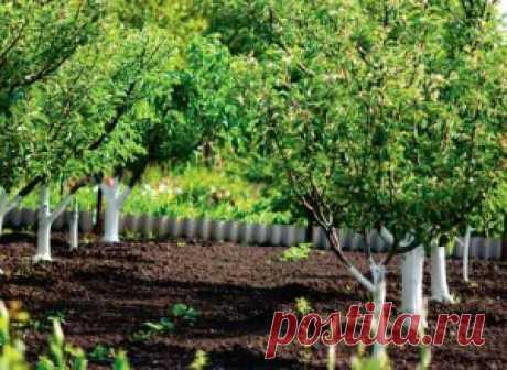 Главные моменты при закладке плодового сада | Дача - впрок