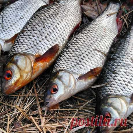 Ловля на поплавок. Секреты рыбалки. | Все о рыбалке и грибной охоте. | Яндекс Дзен