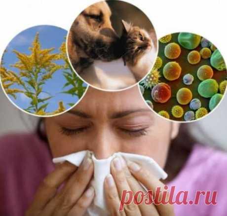 От аллергии как лечиться хочу я поделиться: советы от аллергика, которая сама лечит всю семью.