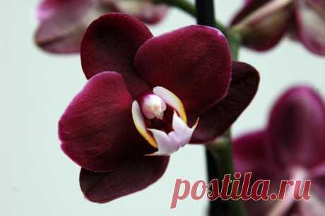 Как спасти заболевшую орхидею в домашних условиях