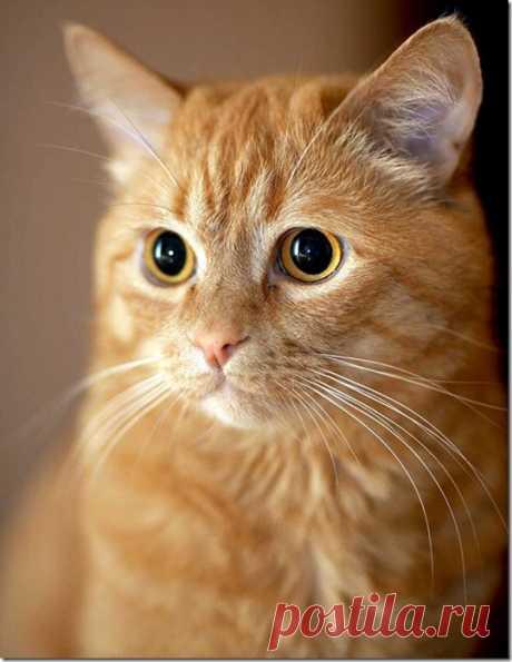 Война с котом…