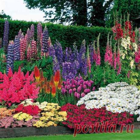 10 plantas de crecimiento rápido para adornamiento de su jardín