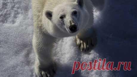 Доклад: за последние 40 лет в мире стало на 60% меньше животных - Новости Общества - Новости Mail.Ru
