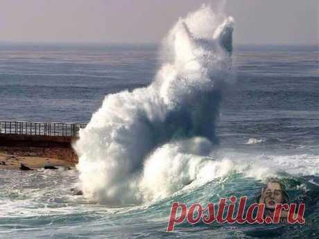 Походе, владыка моря отправил своего любимца прогуляться