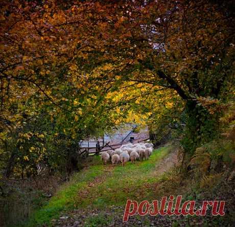 Going home | Serbian countryside | Novica Alorić | Flickr