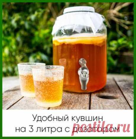 Домашний чайный гриб