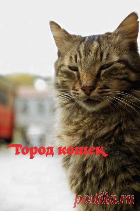 Город кошек (2016) Улицы Стамбула принадлежат тем, кто гуляет по ним сам по себе, а именно — тысячам котов и кошек. «Кеди» — история города, увиденная глазами семи очаровательных и очень независимых кошек, а также людей, которые заботятся о них.