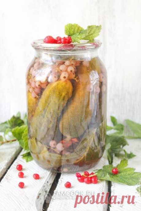 Огурцы с красной смородиной на зиму — рецепт с фото. Как приготовить маринованные огурцы с красной смородиной на зиму?