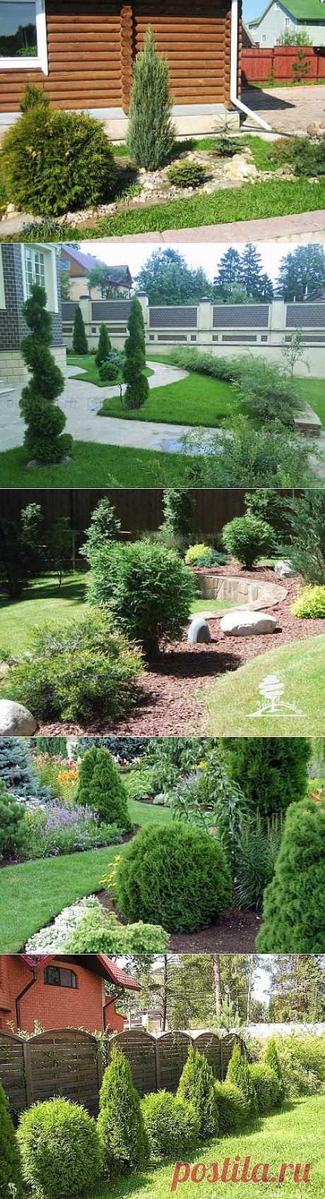 Home garden|Сад, огород, растения дома