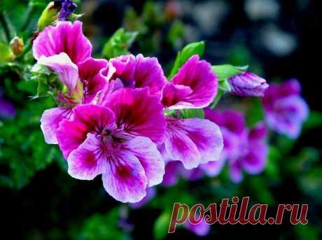Когда цветы в горшках слабеют, я спешу в аптеку. 3 средства (почти даром) возвращают здоровье растениям. Пишу, как правильно | Секреты сада и дачи | Яндекс Дзен