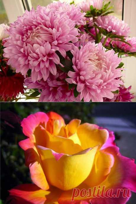 фото осенние цветы:
