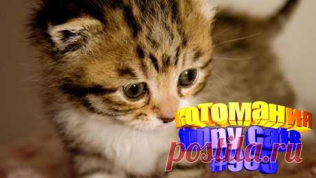 Вам нравится смотреть приколы про котов? Тогда мы уверены, Вам понравится наше видео 😍. Также на котомании Вас ждут: видео кот,видео кота,видео коте,видео котов,видео кошек,видео кошка,видео кошки,видео о котах, видео про, видео смешная кошка, для котов видео, котики мило, кошка видео, кошки видео, приколы о кошках видео, про котов, про кошку, смешно кошка, смешное про кошек, смешные кошки видео до слез