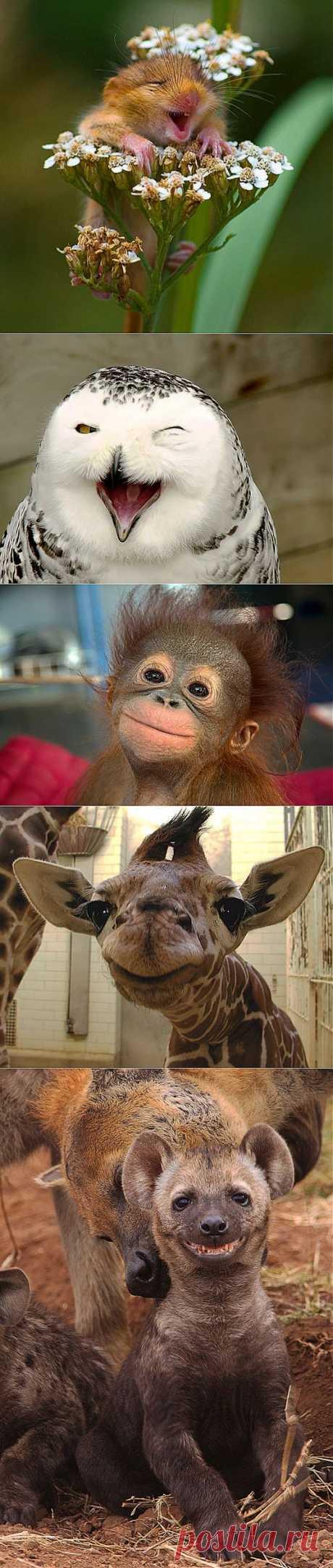Фотографии улыбающихся животных .