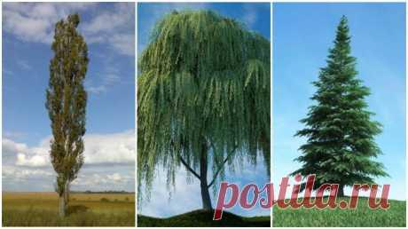 Какие деревья посадить возле выгребной ямы, чтобы надолго забыть про ее откачку.