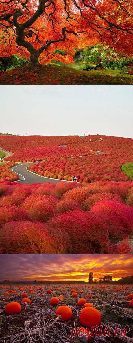 Краски осени | Улетные картинки