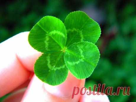 Как определить счастливое растение и вырастить удачу