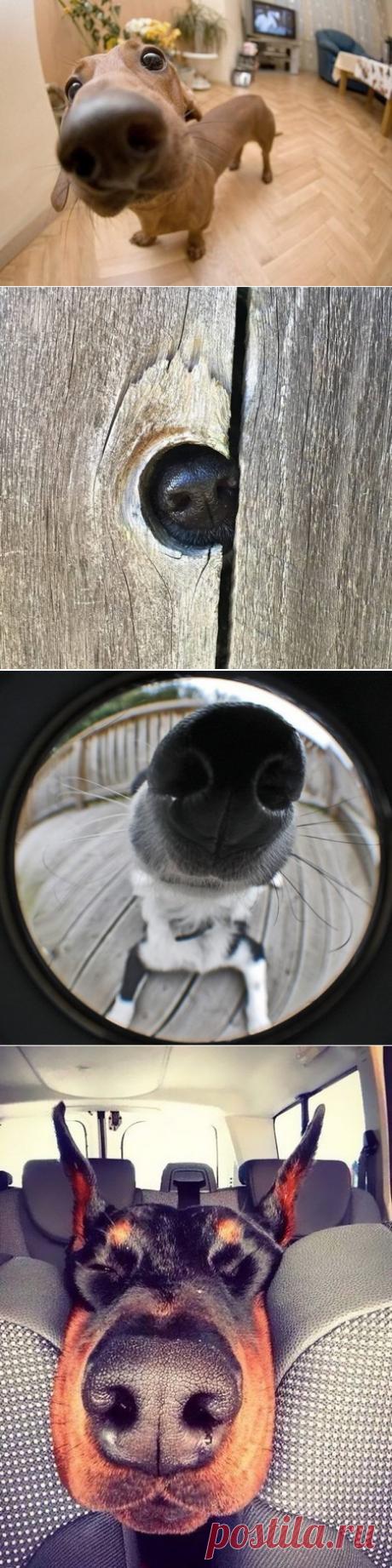 Очень любопытные собаки