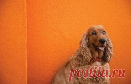 Как использовать цвет в фотографии? 9 идей для крутых кадров