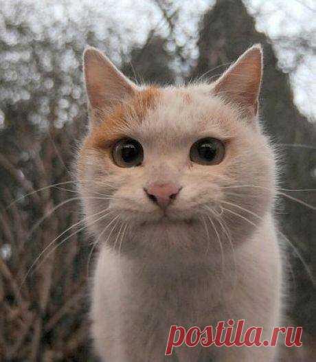 Классный кот.