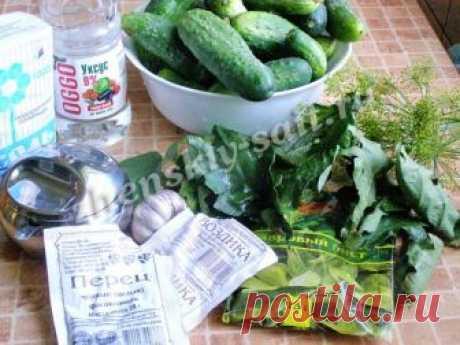 Рецепт хрустящих огурцов на зиму | Огурцы с дубовыми листьями - рецепт с фото