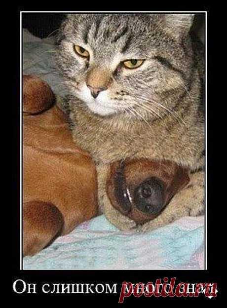 осторожно, коты