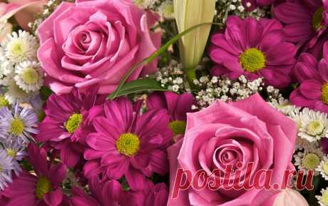Обои Букеты Цветы - Фото : 273460
