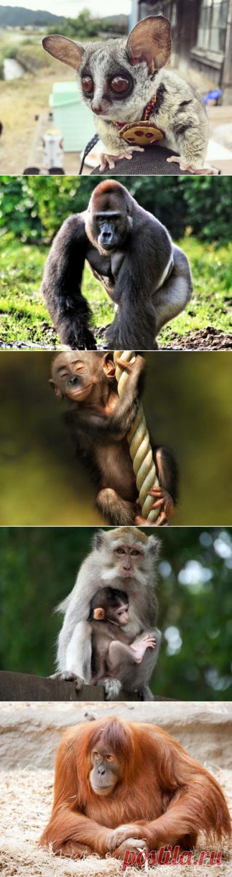 Смотреть изображения обезьян | Зооляндия