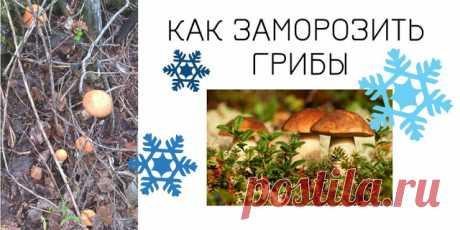 Домашний блог Валерии Питерской: Как заморозить грибы на зиму.