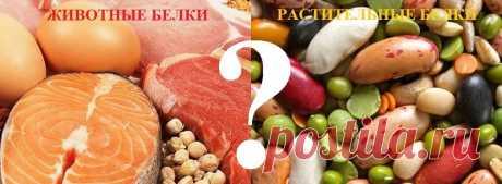 Что такое белки - Питание - Лечение и профилактика от опухолей и рака