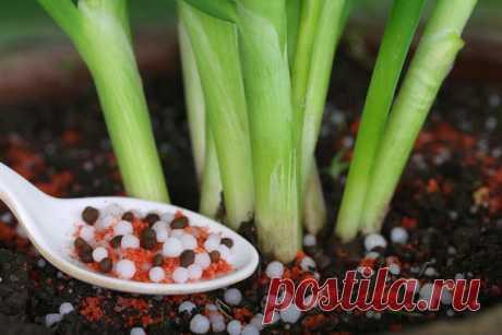 Подкормка овощей: шпаргалка по удобрениям. Обзор статей на сайте 7 дач