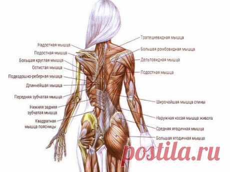 Освобождаем спину от зажимов! ТОП-3 лучших упражнения для растяжки мышц - Жизнь планеты