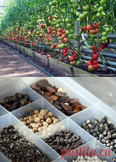 Успех выращивания овощей.