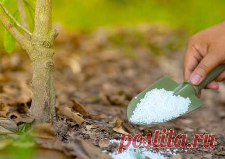 Мочевина (карбамид) — удобрение: применение на садовом участке, правила использования, для чего нужна | Огородные шпаргалки | Яндекс Дзен