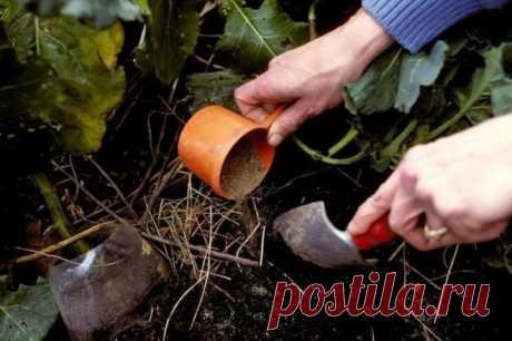 Чем подкормить ягодные кустарники осенью?   В саду (Огород.ru)