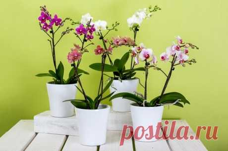 Чем подкормить орхидею для шикарного цветения. Секретные рецепты | Цветы в квартире и на даче – от Радзевской Виктории | Яндекс Дзен