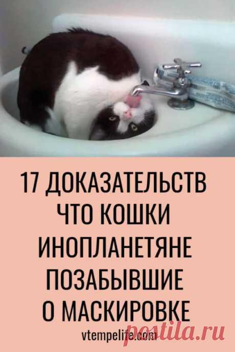 17 фотодоказательств, что кошки — инопланетяне, позабывшие о маскировке | В темпі життя