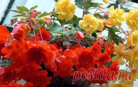 Маленькая хитрость, чтобы цветы в доме цвели долго и пышно.