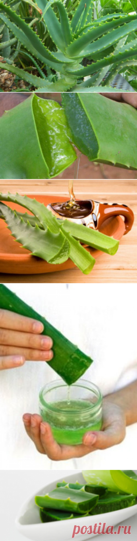 Aloe – useful properties and application of an aloe — Always in shape!