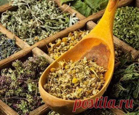 Действенные растительные сборы при стенокардии Целебные свойства лекарственных трав известны с древности. Люди всегда уделяли большое внимание изучению этих даров природы.