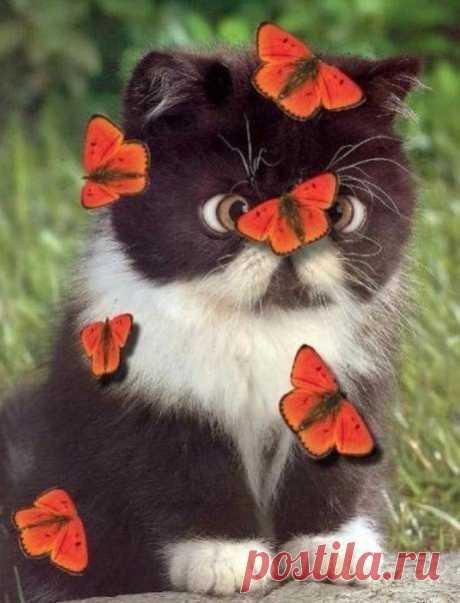 Счастье подобно бабочке. Приходит неoжиданно и тихонько садится на нос.