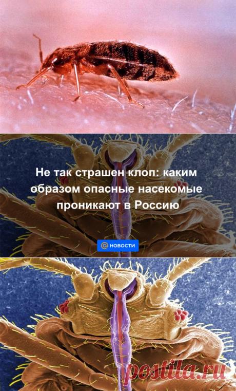 Не так страшен клоп: каким образом опасные насекомые проникают в Россию - Новости Mail.ru