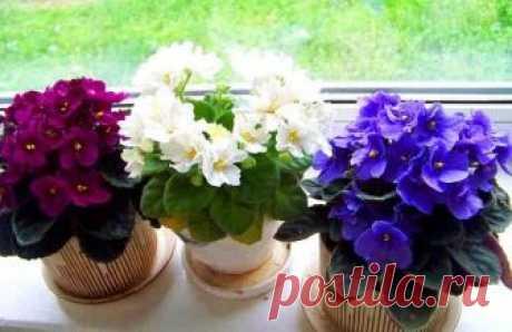 Три простых секрета для красоты и здоровья комнатных растений