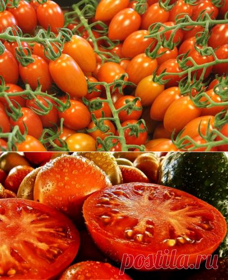 Как увеличить урожай помидоров? Бабушка знает хитрость | Дачный _ круг