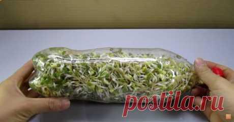 Удивительный лайфхак! Использование пластиковой бутылки для выращивания ростков бобовых ...